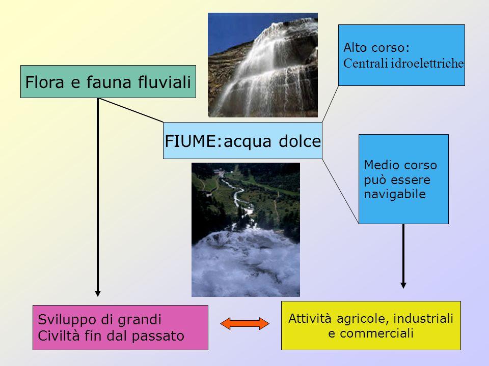 FIUME:acqua dolce Flora e fauna fluviali Sviluppo di grandi Civiltà fin dal passato Alto corso: Centrali idroelettriche Medio corso può essere navigab
