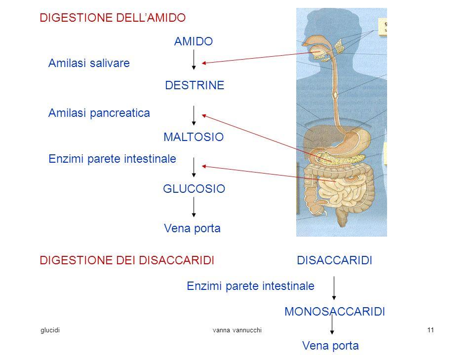 glucidivanna vannucchi11 DIGESTIONE DELLAMIDO AMIDO DESTRINE MALTOSIO GLUCOSIO Vena porta Amilasi salivare Amilasi pancreatica Enzimi parete intestinale DIGESTIONE DEI DISACCARIDIDISACCARIDI MONOSACCARIDI Enzimi parete intestinale Vena porta