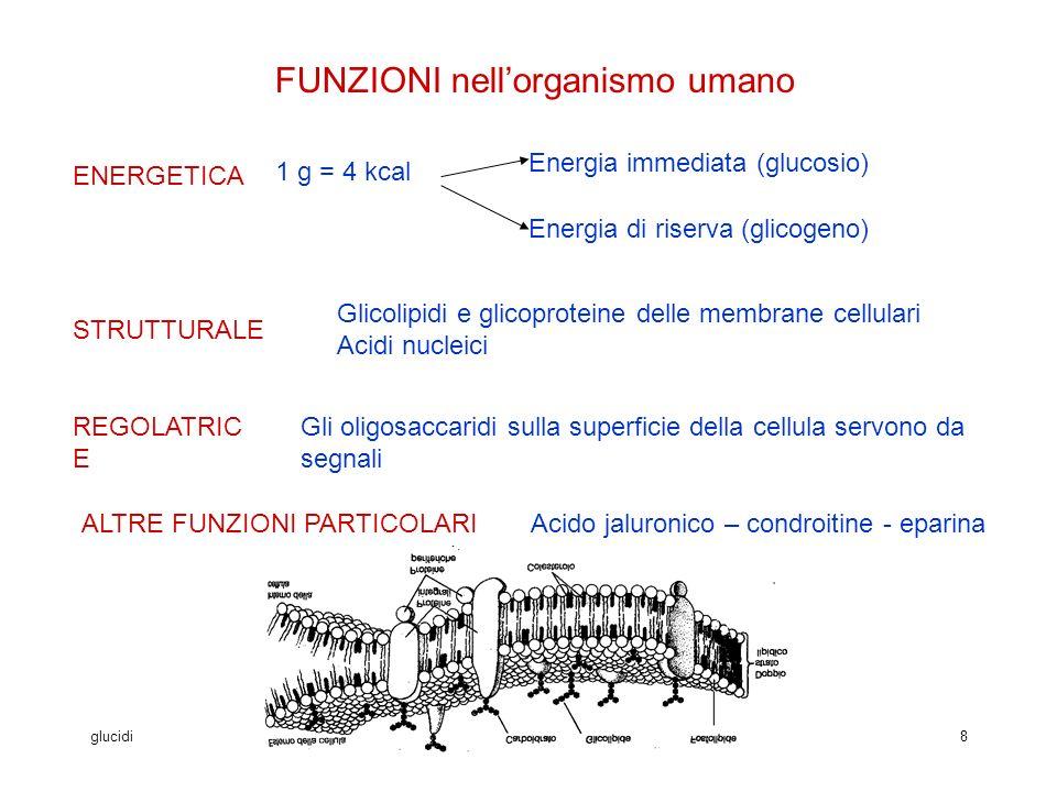 glucidivanna vannucchi8 FUNZIONI nellorganismo umano ENERGETICA Energia immediata (glucosio) STRUTTURALE REGOLATRIC E 1 g = 4 kcal Energia di riserva (glicogeno) Glicolipidi e glicoproteine delle membrane cellulari Acidi nucleici Gli oligosaccaridi sulla superficie della cellula servono da segnali ALTRE FUNZIONI PARTICOLARIAcido jaluronico – condroitine - eparina