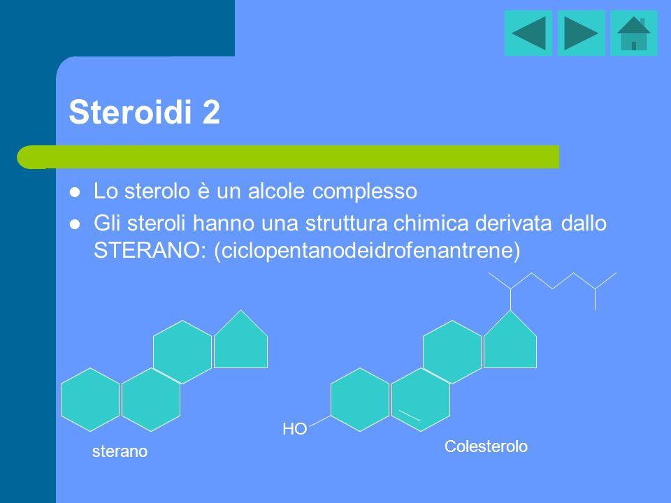 Steroidi 2 Lo sterolo è un alcole complesso Gli steroli hanno una struttura chimica derivata dallo STERANO: (ciclopentanodeidrofenantrene) sterano HO