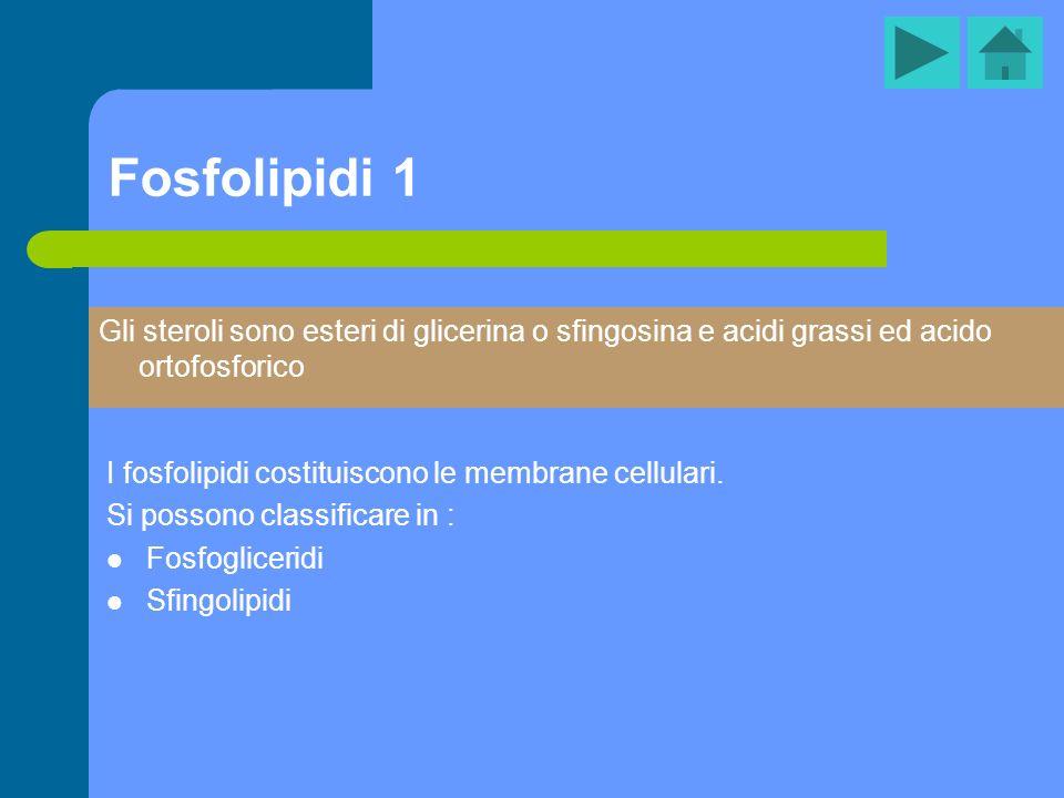 Fosfolipidi 1 I fosfolipidi costituiscono le membrane cellulari. Si possono classificare in : Fosfogliceridi Sfingolipidi Gli steroli sono esteri di g