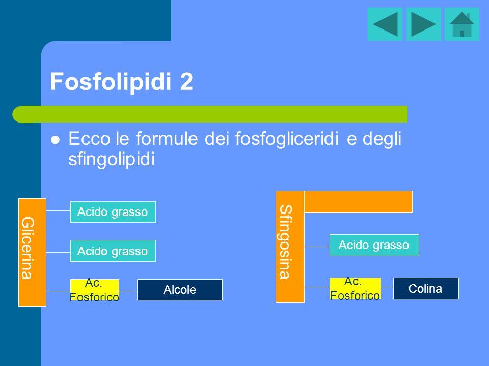 Fosfolipidi 2 Ecco le formule dei fosfogliceridi e degli sfingolipidi Glicerina Acido grasso Ac. Fosforico Alcole Sfingosina Acido grasso Colina Ac. F