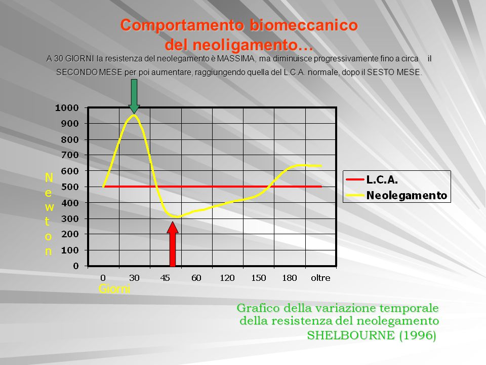 Comportamento biomeccanico del neoligamento… A 30 GIORNI la resistenza del neolegamento è MASSIMA, ma diminuisce progressivamente fino a circa il SECO