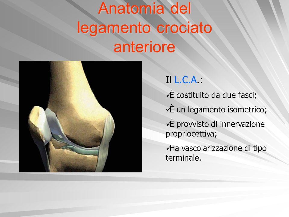 Anatomia del legamento crociato anteriore Il L.C.A.: È costituito da due fasci; È un legamento isometrico; È provvisto di innervazione propriocettiva;