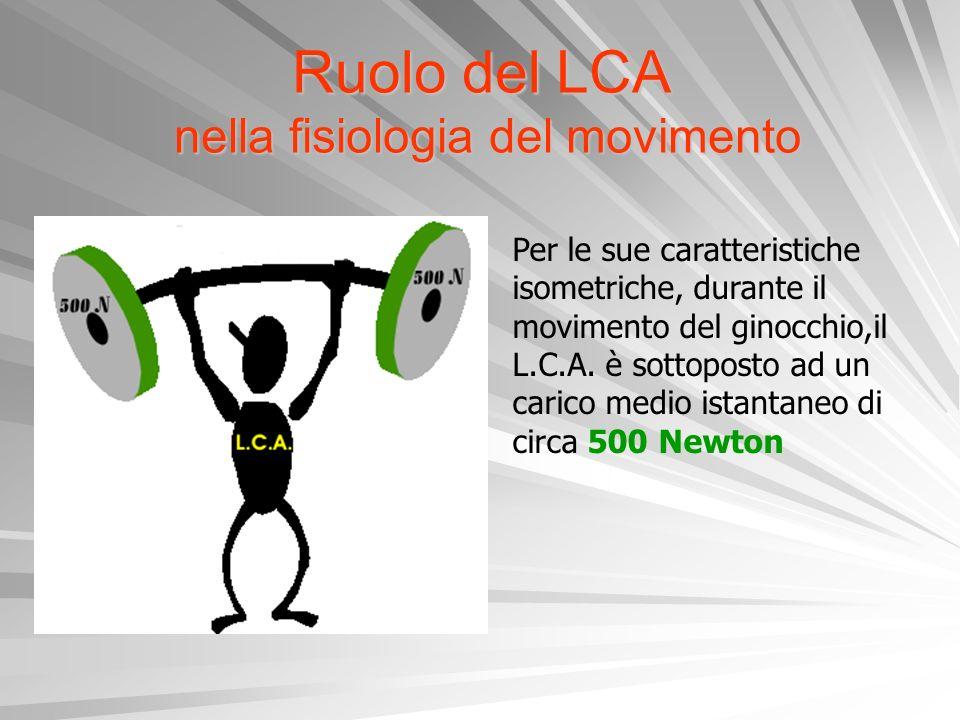 Ruolo del LCA nella fisiologia del movimento Per le sue caratteristiche isometriche, durante il movimento del ginocchio,il L.C.A. è sottoposto ad un c