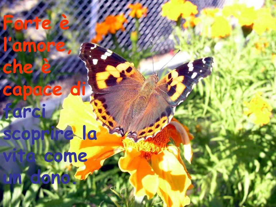 Forte è lamore, che è capace di farci scoprire la vita come un dono.
