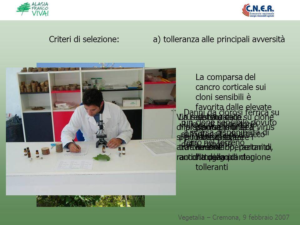Vegetalia – Cremona, 9 febbraio 2007 Virus del mosaico su clone di pioppo sensibile. Il virus si può trasmettere attraverso le operazioni di raccolta