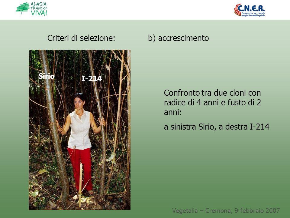 Vegetalia – Cremona, 9 febbraio 2007 Criteri di selezione: b) accrescimento Confronto tra due cloni con radice di 4 anni e fusto di 2 anni: a sinistra