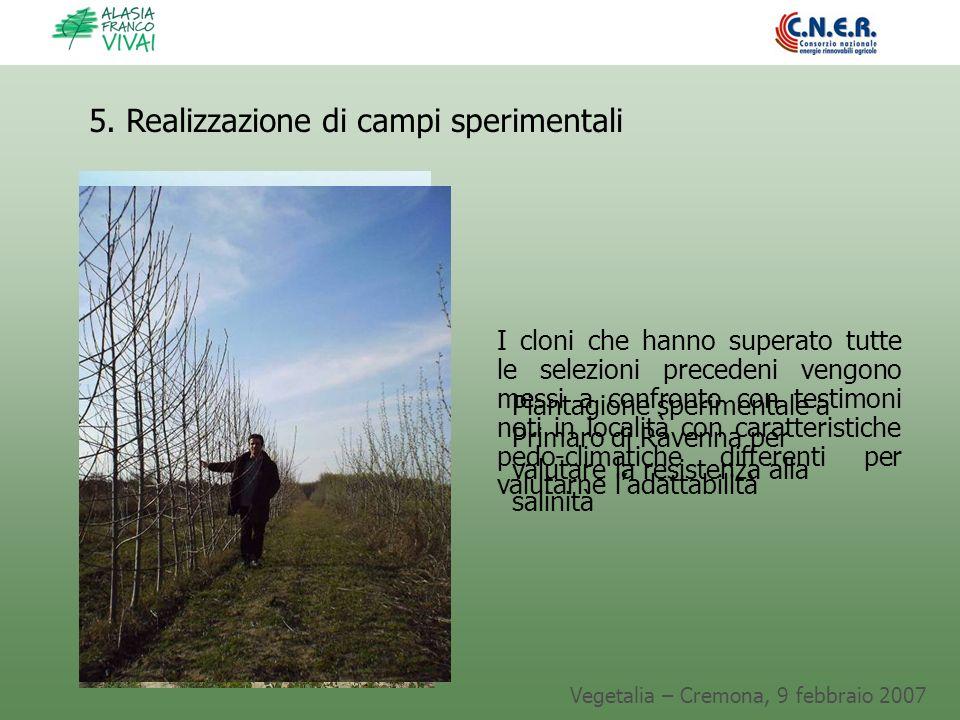 Vegetalia – Cremona, 9 febbraio 2007 I cloni che hanno superato tutte le selezioni precedeni vengono messi a confronto con testimoni noti in località