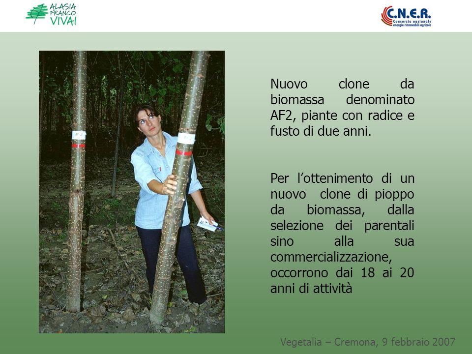 Vegetalia – Cremona, 9 febbraio 2007 Nuovo clone da biomassa denominato AF2, piante con radice e fusto di due anni. Per lottenimento di un nuovo clone
