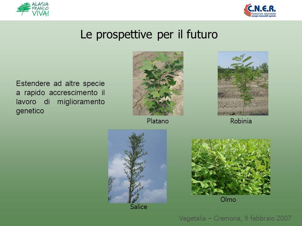 Vegetalia – Cremona, 9 febbraio 2007 Le prospettive per il futuro Salice Platano Olmo Robinia Estendere ad altre specie a rapido accrescimento il lavo