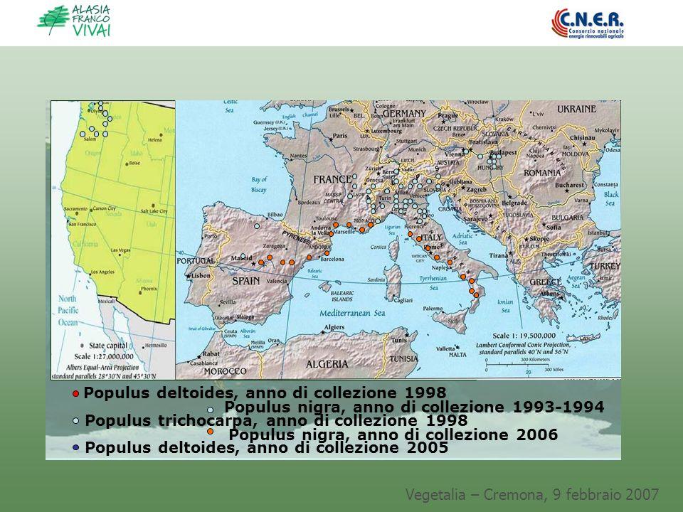 Vegetalia – Cremona, 9 febbraio 2007 Populus deltoides, anno di collezione 1998 Populus trichocarpa, anno di collezione 1998 Populus deltoides, anno d