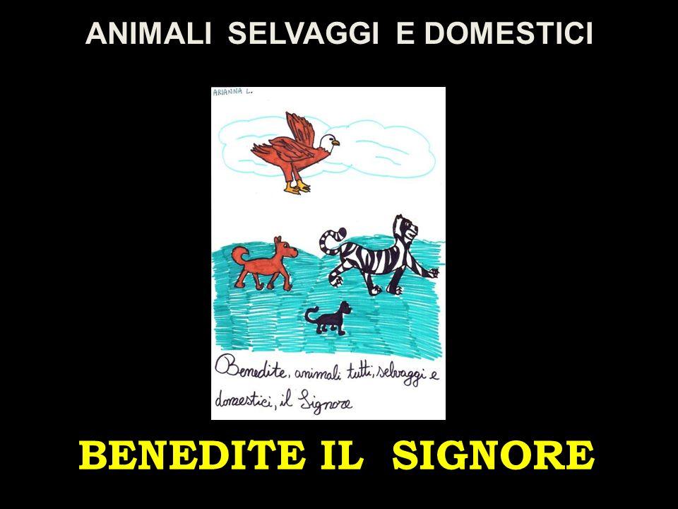 BENEDITE IL SIGNORE ANIMALI SELVAGGI E DOMESTICI