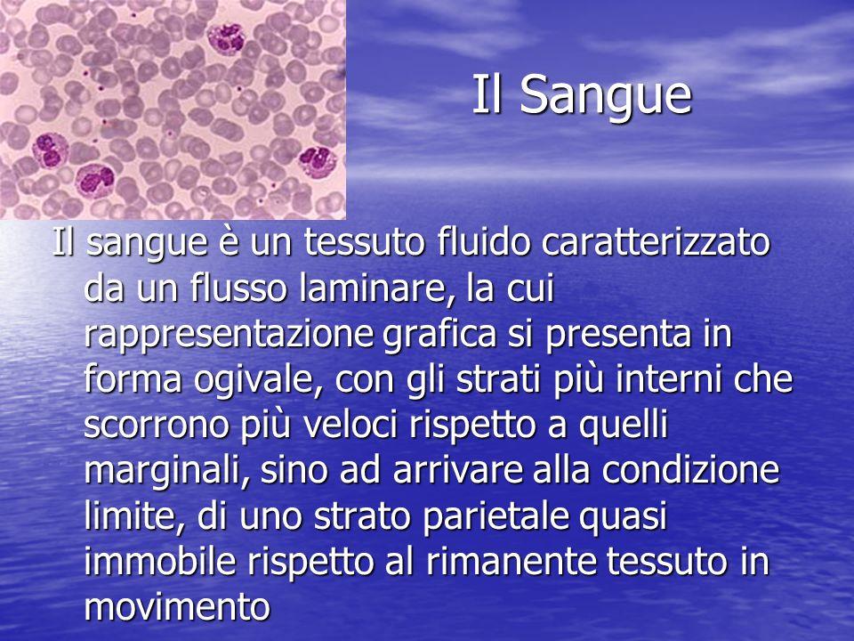 Il Sangue Il Sangue Il sangue è un tessuto fluido caratterizzato da un flusso laminare, la cui rappresentazione grafica si presenta in forma ogivale,