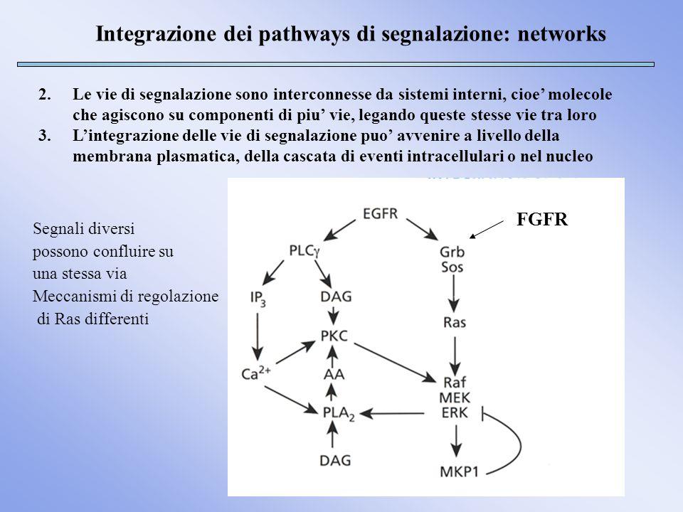 Integrazione dei pathways di segnalazione: networks 2.Le vie di segnalazione sono interconnesse da sistemi interni, cioe molecole che agiscono su comp