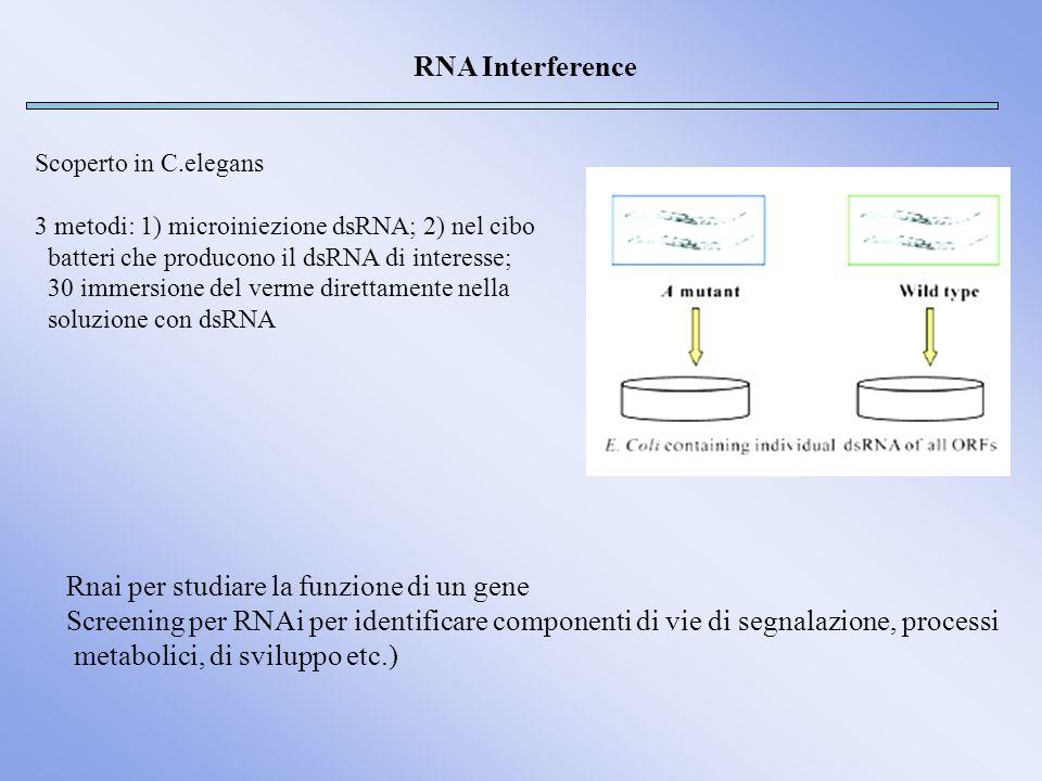 RNA Interference Scoperto in C.elegans 3 metodi: 1) microiniezione dsRNA; 2) nel cibo batteri che producono il dsRNA di interesse; 30 immersione del v