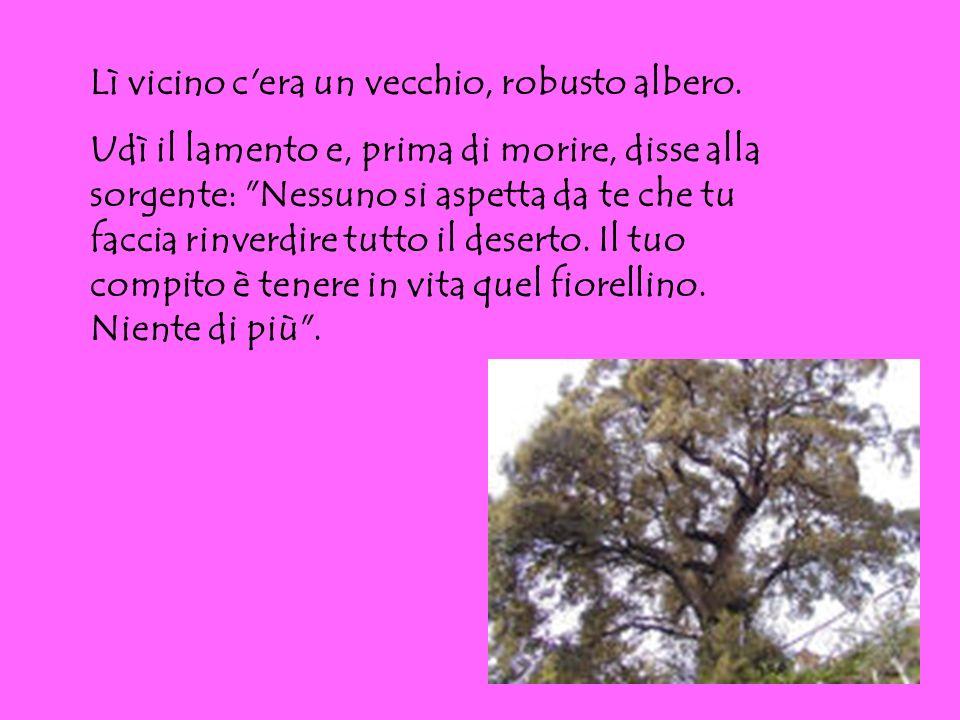 Lì vicino c'era un vecchio, robusto albero. Udì il lamento e, prima di morire, disse alla sorgente: