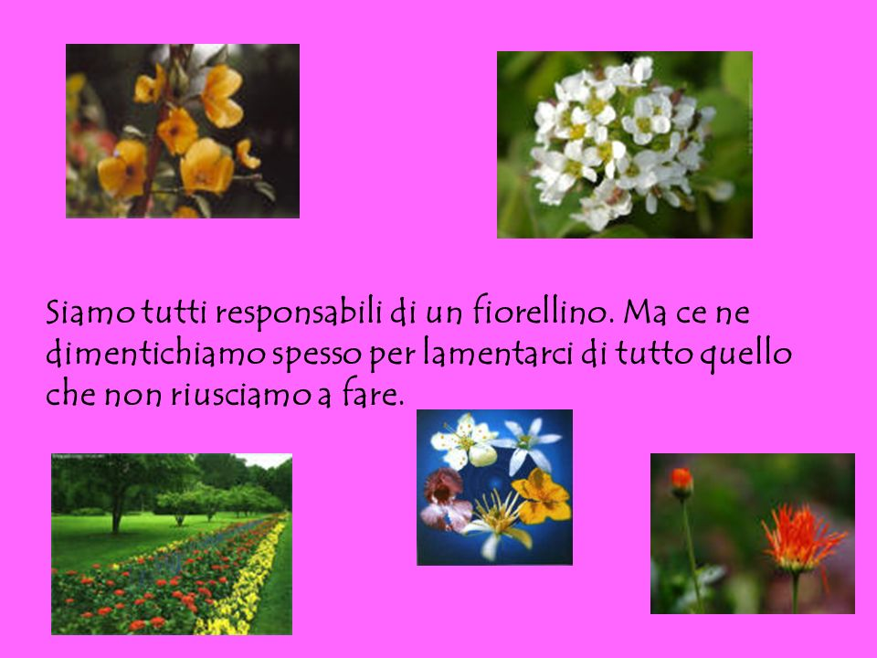 Siamo tutti responsabili di un fiorellino. Ma ce ne dimentichiamo spesso per lamentarci di tutto quello che non riusciamo a fare.