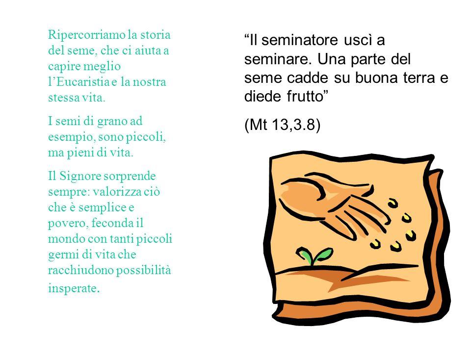 Ripercorriamo la storia del seme, che ci aiuta a capire meglio lEucaristia e la nostra stessa vita.