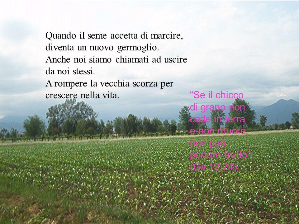 Quando il seme accetta di marcire, diventa un nuovo germoglio.