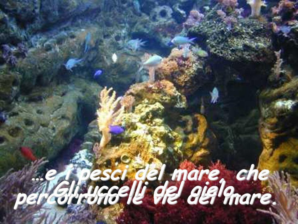 …e i pesci del mare, che percorrono le vie del mare. Gli uccelli del cielo…