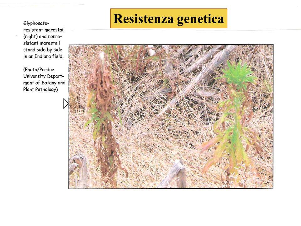 24 Resistenza genetica