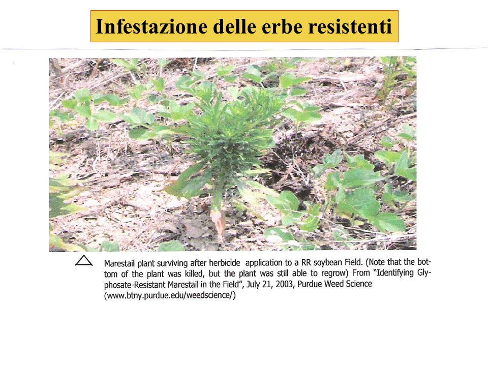 25 Infestazione delle erbe resistenti