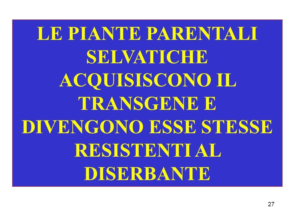 27 LE PIANTE PARENTALI SELVATICHE ACQUISISCONO IL TRANSGENE E DIVENGONO ESSE STESSE RESISTENTI AL DISERBANTE