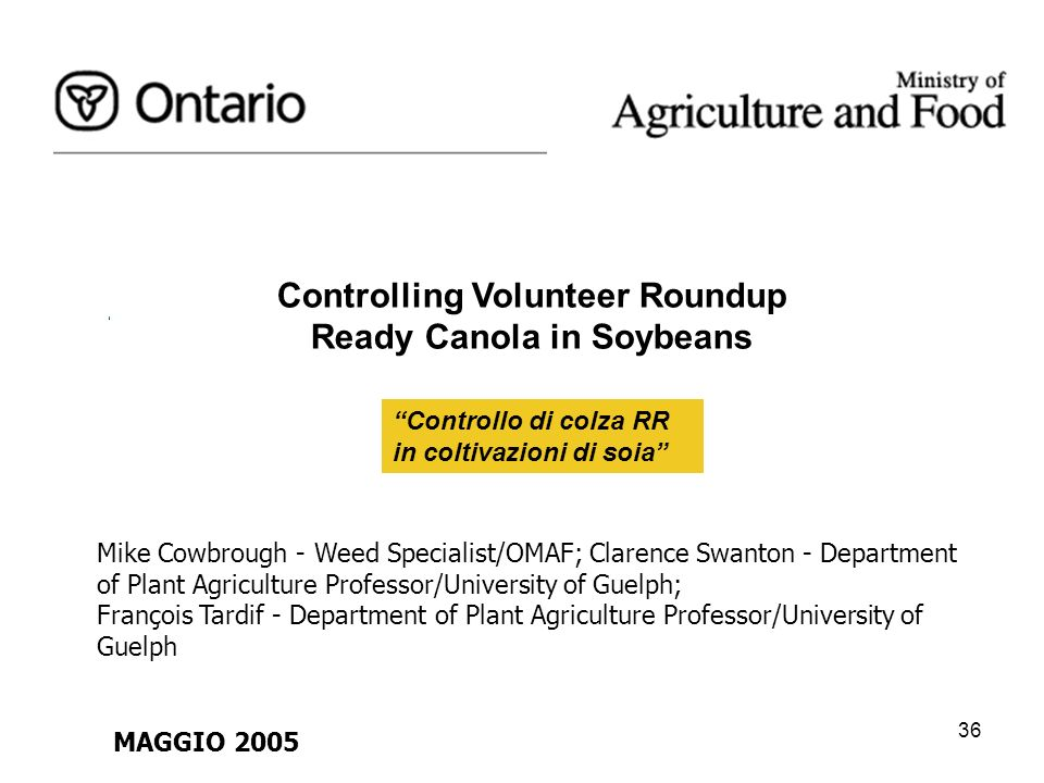 36 Controlling Volunteer Roundup Ready Canola in Soybeans Controllo di colza RR in coltivazioni di soia Mike Cowbrough - Weed Specialist/OMAF; Clarenc