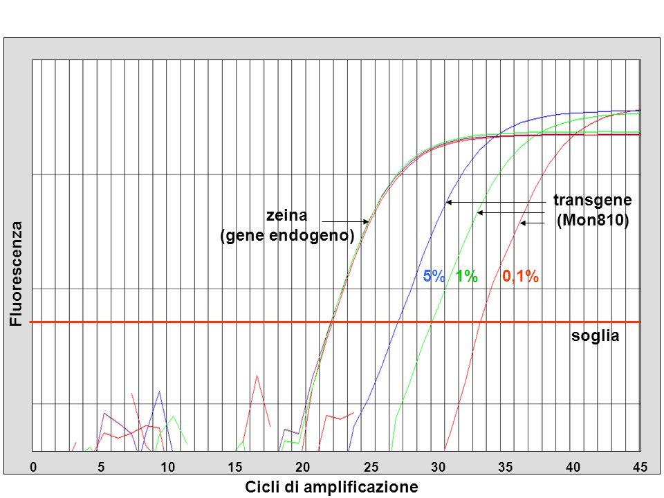 Cicli di amplificazione 05101520 2530354045 Fluorescenza zeina (gene endogeno) transgene (Mon810) soglia 5%1%0,1%
