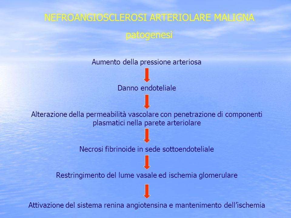 NEFROANGIOSCLEROSI ARTERIOLARE MALIGNA patogenesi Aumento della pressione arteriosa Danno endoteliale Alterazione della permeabilità vascolare con pen
