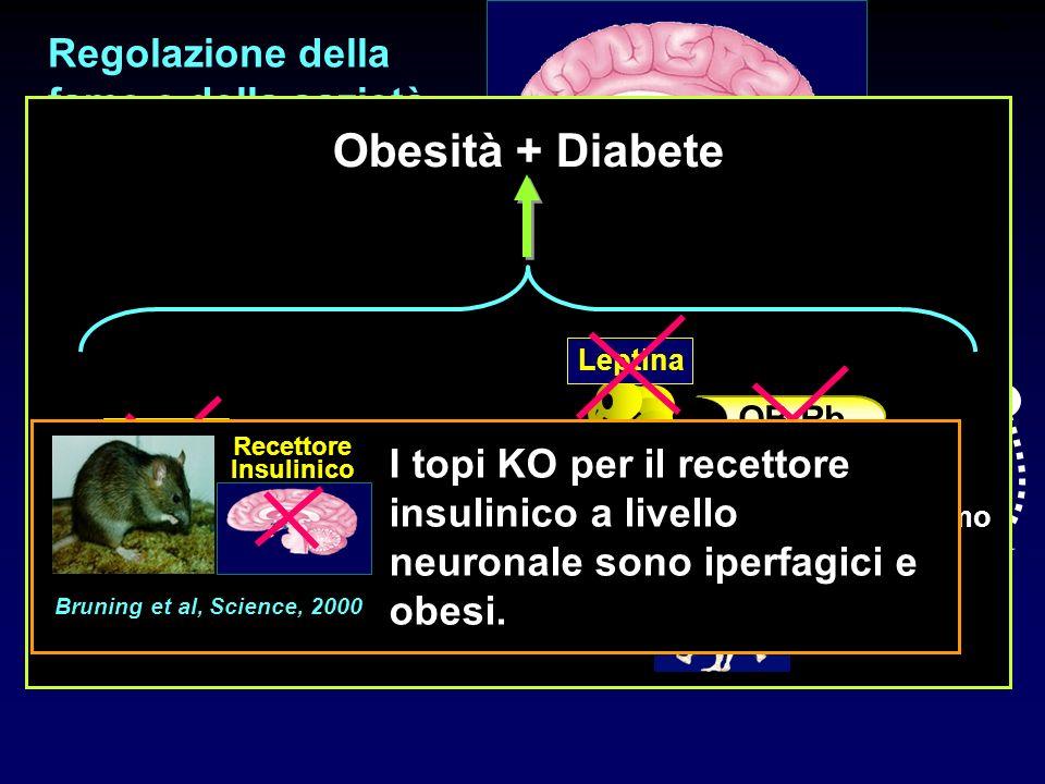 - + Regolazione della fame e della sazietà Meccanismi a LUNGO TERMINE Insulina - Leptina - db/db Leptina OB-Rb ob/ob Leptina OB-Rb + Ipogonadismo Obes