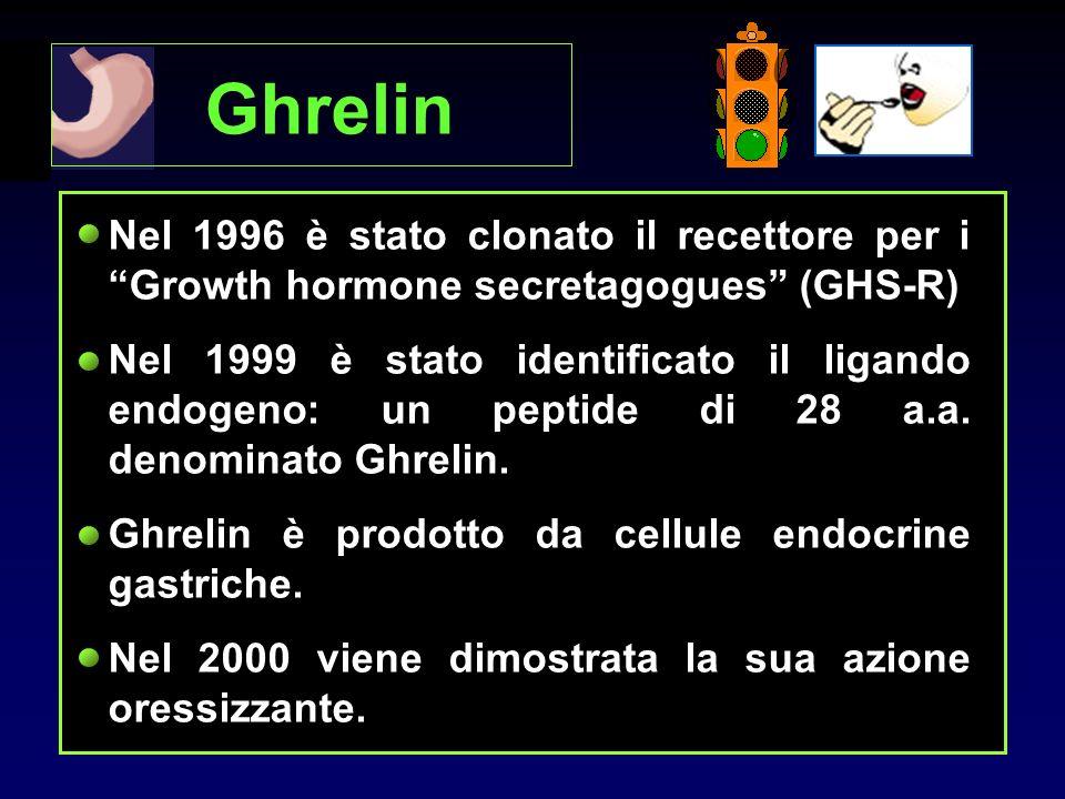 Ghrelin Nel 1996 è stato clonato il recettore per i Growth hormone secretagogues (GHS-R) Nel 1999 è stato identificato il ligando endogeno: un peptide