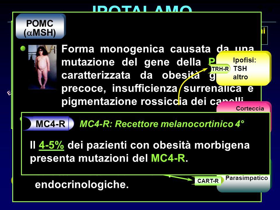 IPOTALAMO Nucleo Arcuato Meccanismi Effettori Barriera Emato-encefalica POMC ( MSH) CART NPY AgRP Leptina OB-R Stimoli oressizzanti Stimoli anoressizz