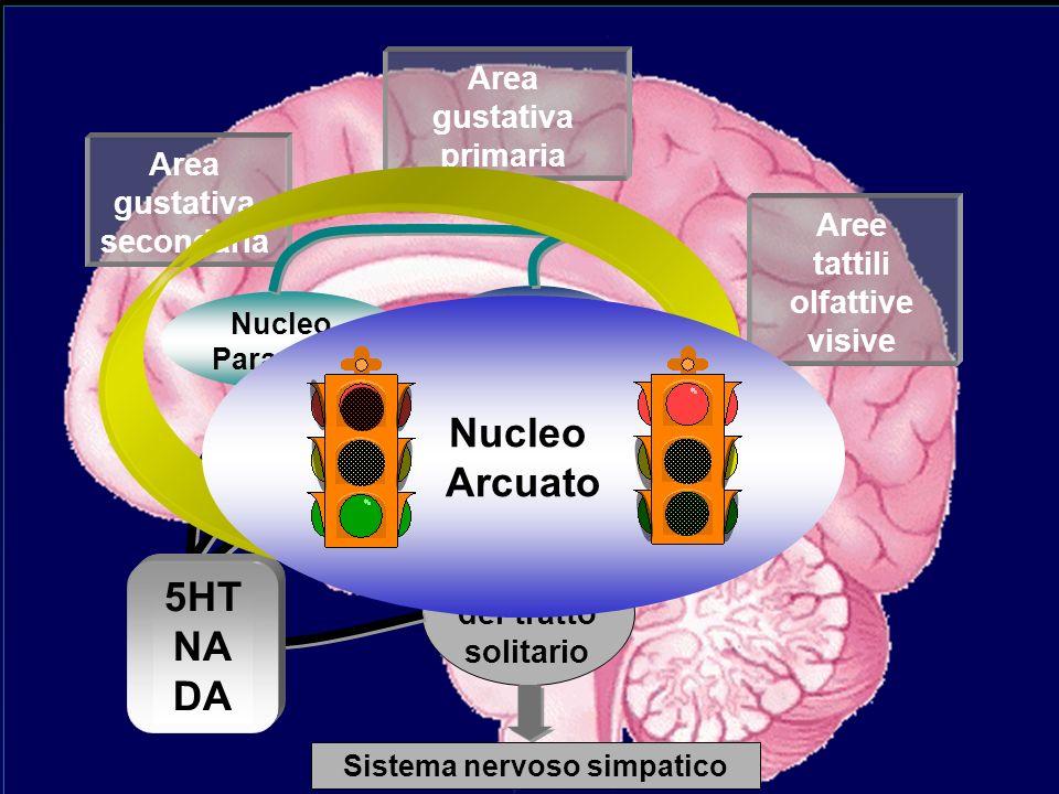 Aree tattili olfattive visive Area gustativa primaria Area gustativa secondaria Nucleo del tratto solitario Nucleo Paraventr. Ipotalamo Laterale Nucle