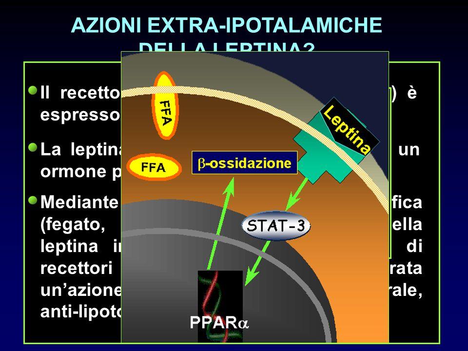 AZIONI EXTRA-IPOTALAMICHE DELLA LEPTINA? Il recettore attivo della leptina (OB-Rb) è espresso in molti tessuti. La leptina sempre più si sta rivelando
