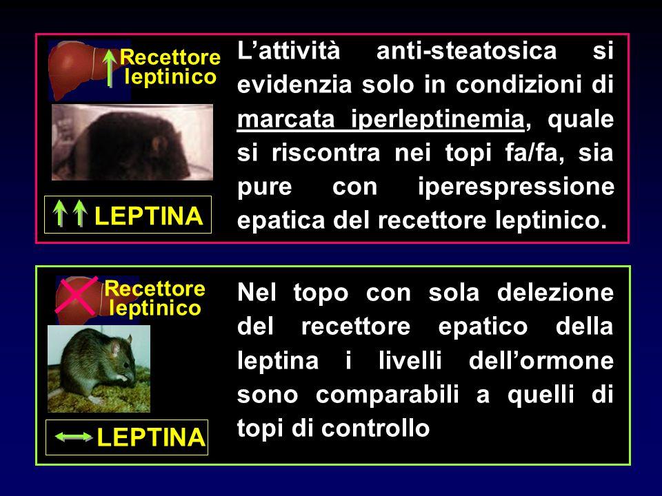 Recettore leptinico LEPTINA Lattività anti-steatosica si evidenzia solo in condizioni di marcata iperleptinemia, quale si riscontra nei topi fa/fa, si