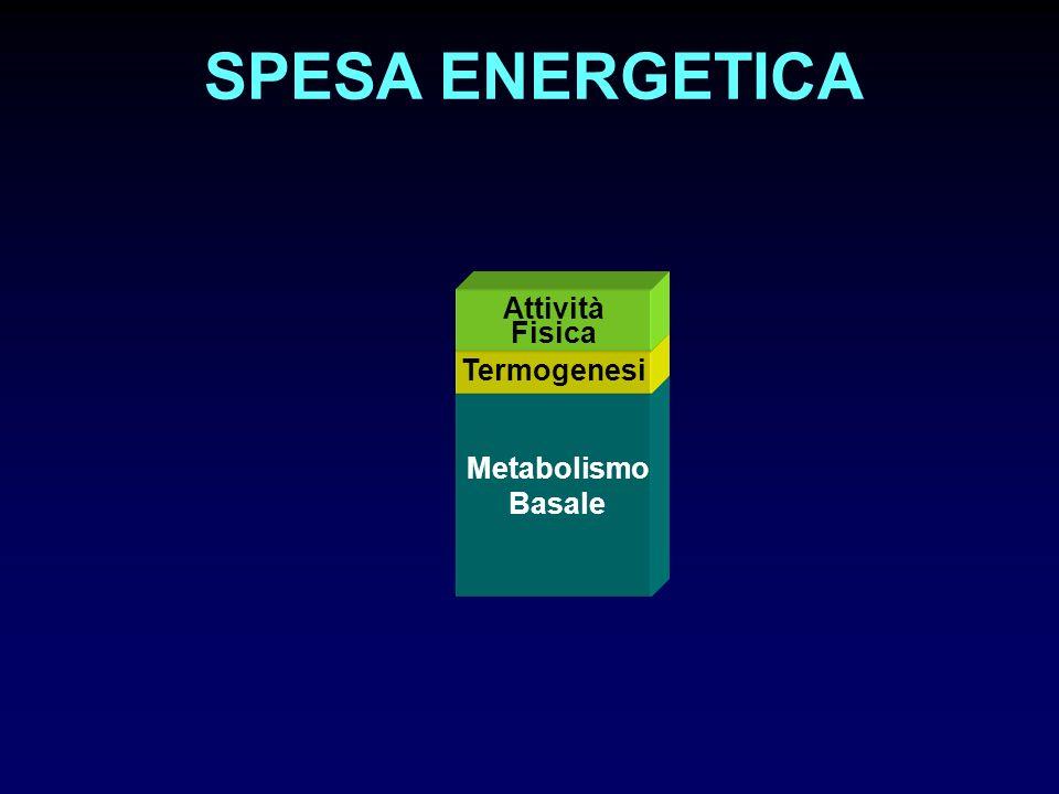 Metabolismo Basale Termogenesi Attività Fisica SPESA ENERGETICA