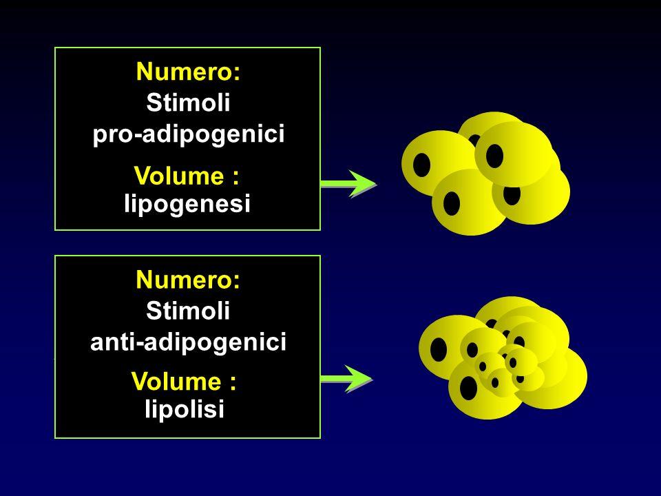 BILANCIO ENERGETICO POSITIVO BILANCIO ENERGETICO NEGATIVO Numero: Stimoli pro-adipogenici Volume : lipogenesi Numero: Stimoli anti-adipogenici Volume