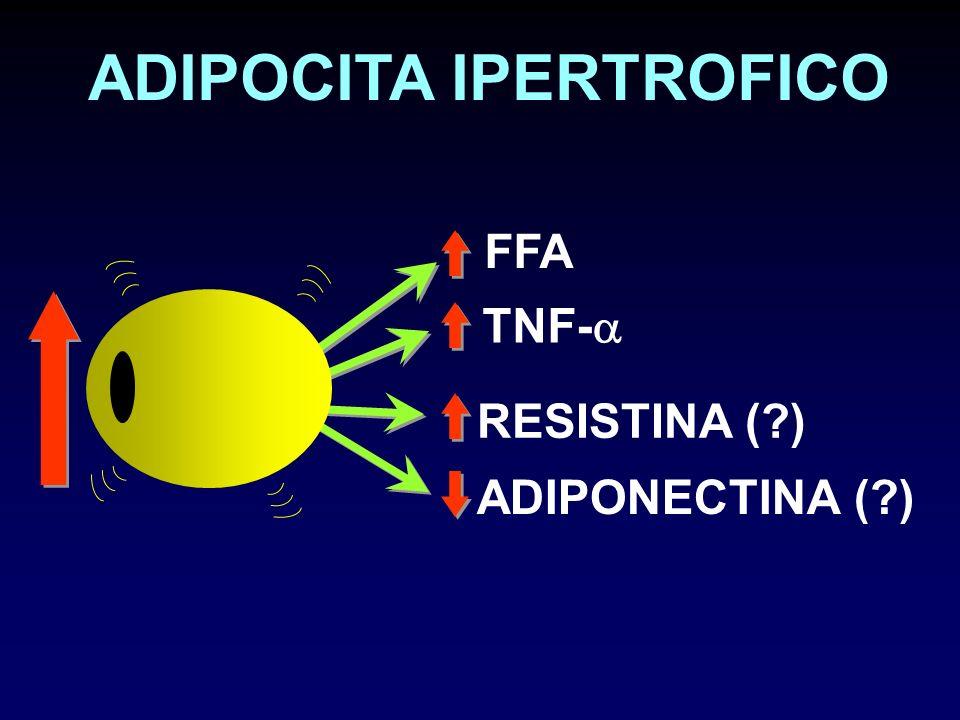 ADIPOCITA IPERTROFICO TNF- FFA RESISTINA (?) ADIPONECTINA (?)