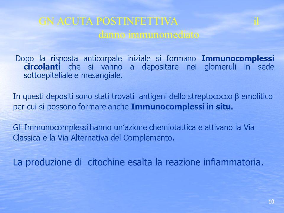 10 Dopo la risposta anticorpale iniziale si formano Immunocomplessi circolanti che si vanno a depositare nei glomeruli in sede sottoepiteliale e mesan