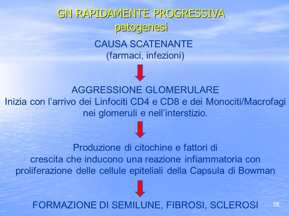 28 CAUSA SCATENANTE (farmaci, infezioni) AGGRESSIONE GLOMERULARE Inizia con larrivo dei Linfociti CD4 e CD8 e dei Monociti/Macrofagi nei glomeruli e n