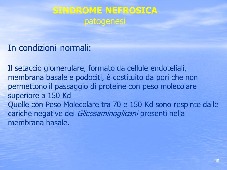 40 In condizioni normali: Il setaccio glomerulare, formato da cellule endoteliali, membrana basale e podociti, è costituito da pori che non permettono