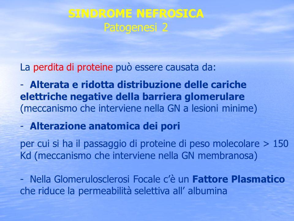La perdita di proteine può essere causata da: - Alterata e ridotta distribuzione delle cariche elettriche negative della barriera glomerulare (meccani