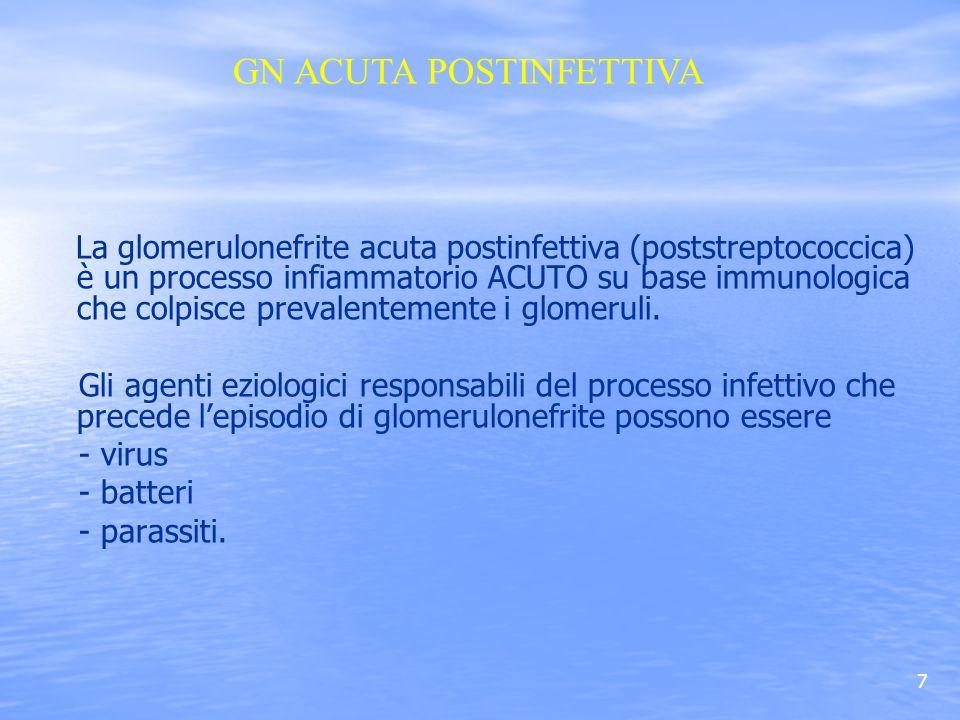 7 La glomerulonefrite acuta postinfettiva (poststreptococcica) è un processo infiammatorio ACUTO su base immunologica che colpisce prevalentemente i g