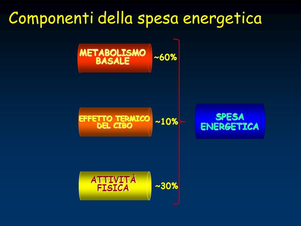 SPESA ENERGETICA METABOLISMO BASALE EFFETTO TERMICO DEL CIBO ATTIVITÀ FISICA ~60% ~30% ~10% Componenti della spesa energetica