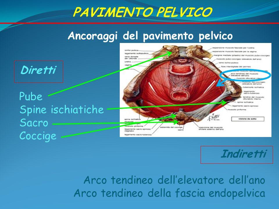 Pavimento pelvico 1.Diaframma pelvico 2. Fascia endopelvica 3.