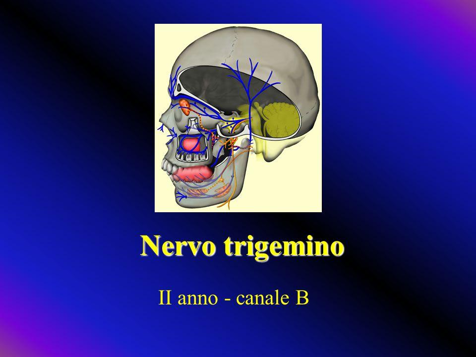 Nervo trigemino II anno - canale B