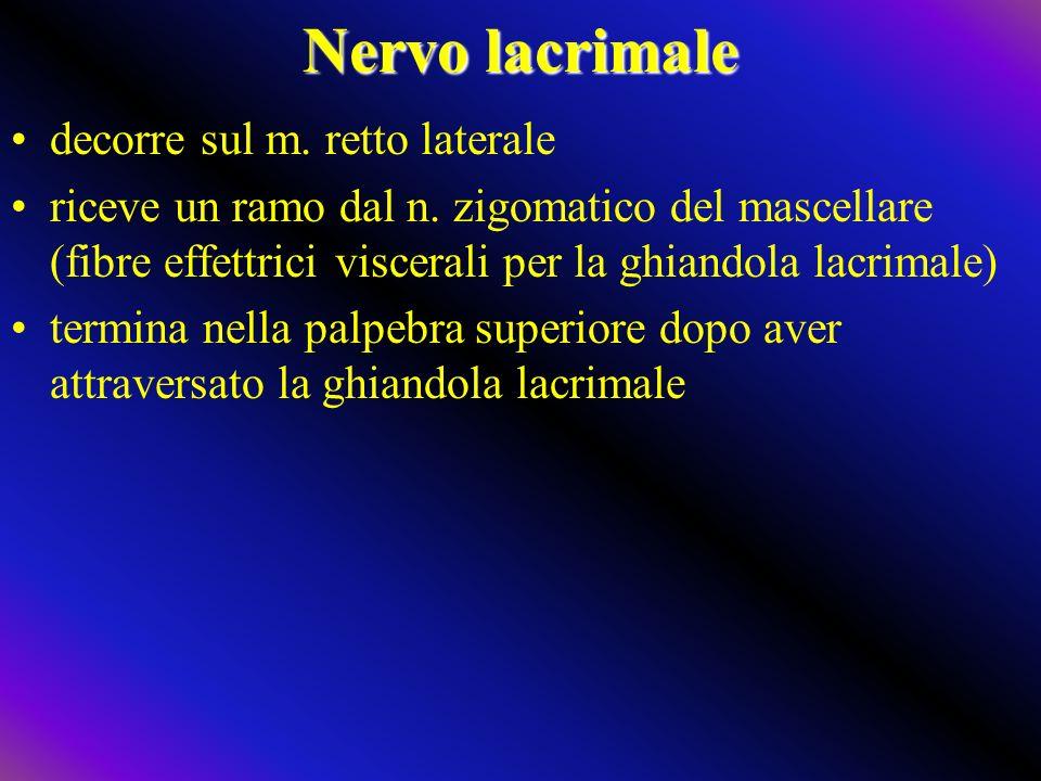 Nervo lacrimale decorre sul m. retto laterale riceve un ramo dal n. zigomatico del mascellare (fibre effettrici viscerali per la ghiandola lacrimale)