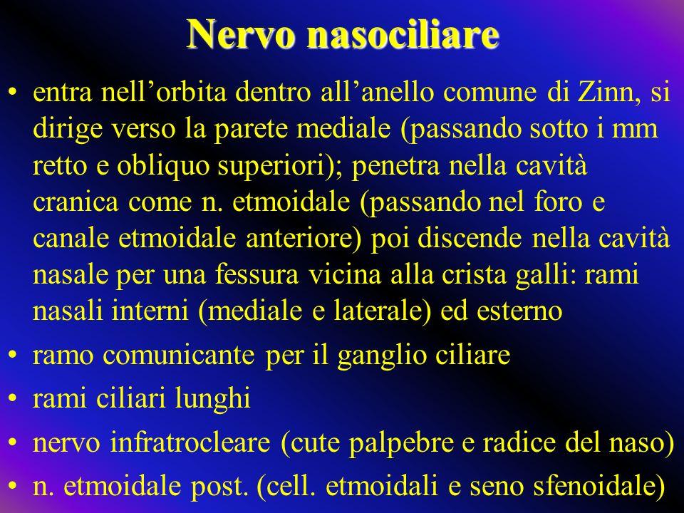 Nervo nasociliare entra nellorbita dentro allanello comune di Zinn, si dirige verso la parete mediale (passando sotto i mm retto e obliquo superiori); penetra nella cavità cranica come n.